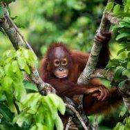 Borneo Private Expedition