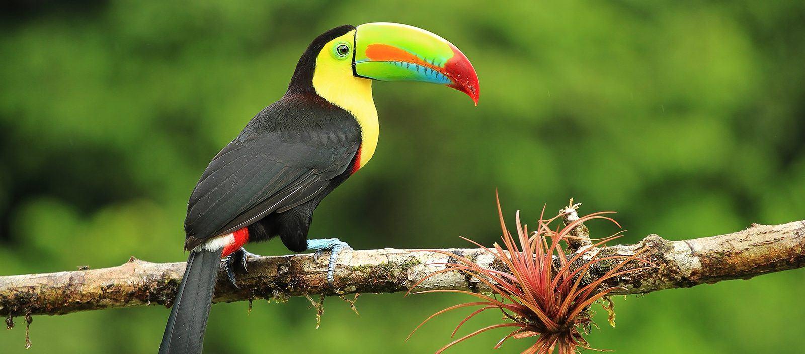 Costa Rica Private Expedition