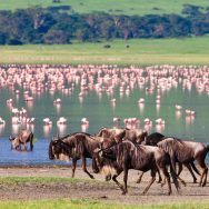 On Safari: Tanzania's Great Migration - National Geographic Expeditions