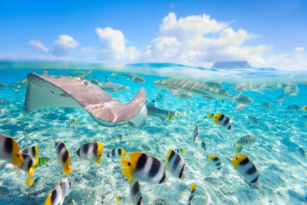 French Polynesia - National Geographic Expeditions