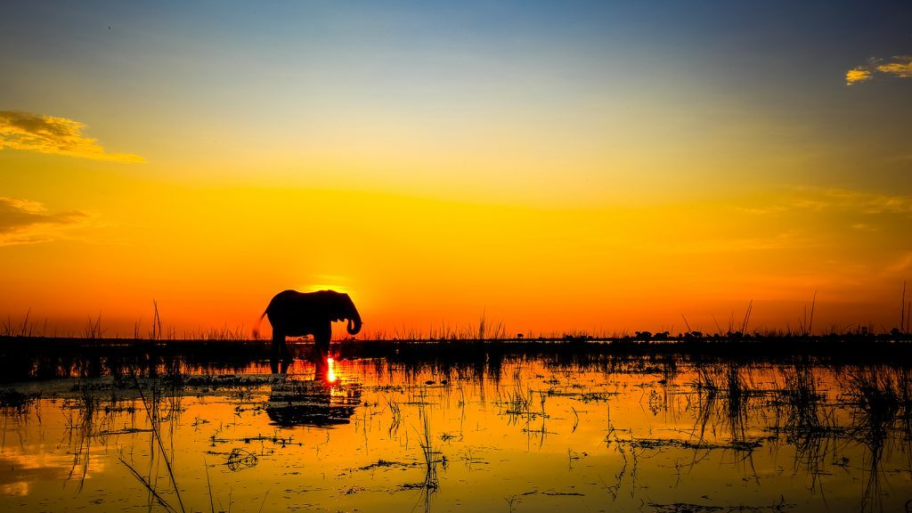 Botswana, Africa - National Geographic Expeditions