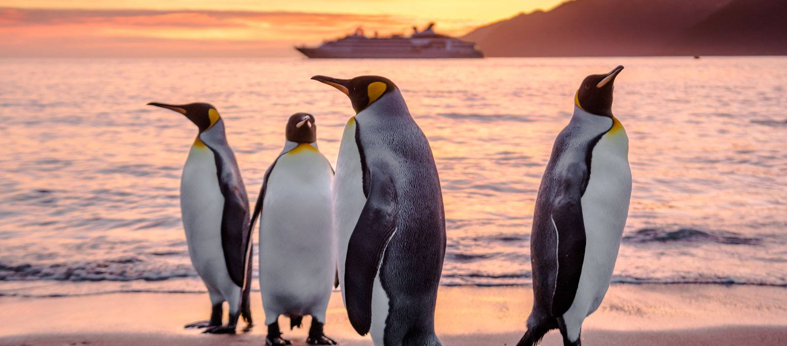 The Falklands, South Georgia and Antarctica: The Great Austral Loop